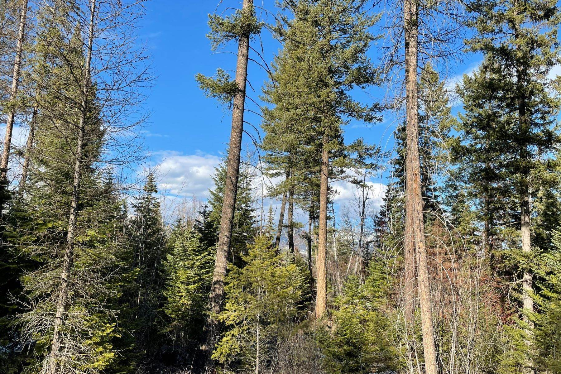 5. Land for Sale at Tamarack Ridge Homesite 38 Harlequin Court Whitefish, Montana 59937 United States